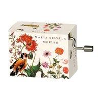 Fridolin - Flasneta Maria Sibylla Merian (pasari), Vivaldi Spring