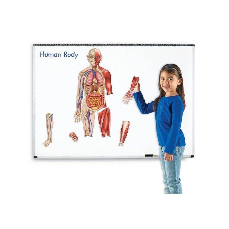 Learning Resources Corpul uman – set magnetic din categoria Jucarii educative de la Learning Resources