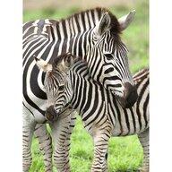 Ravensburger - Puzzle animale Zebre Puzzle Copii, piese 300
